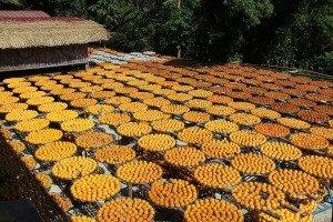 웨이웨이자 곶감 교육 농장 (味衛佳柿餅)