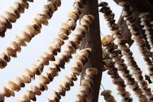 말굽조개 테마관 (馬蹄蛤)